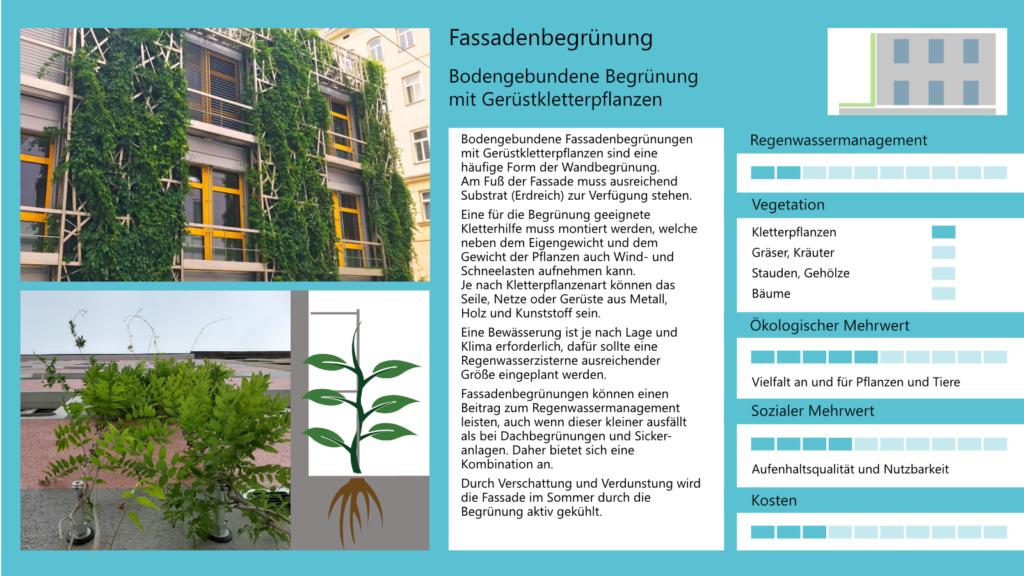 Fassadenbegrünung - Bodengebundene Begrünung mit Gerüstkletterpflanzen