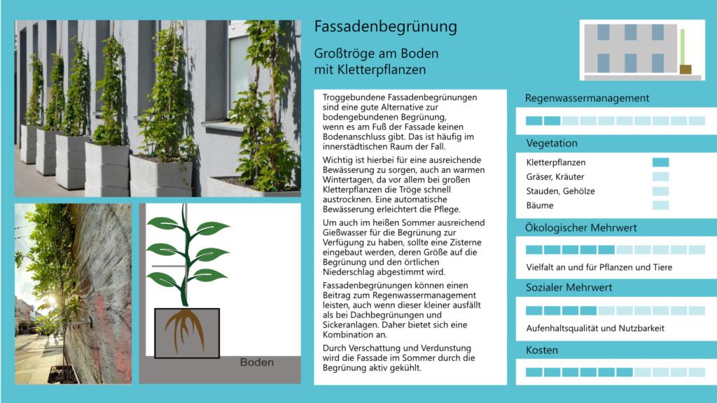 Fassadenbegrünung - Großtröge am Boden mit Kletterpflanzen